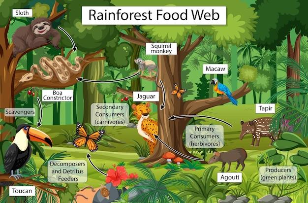 Diagrama que muestra la red trófica en la selva tropical.