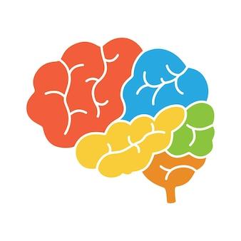 Un diagrama de la vista lateral del cerebro humano, anatomía.