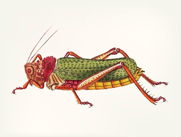 Dibujado a mano de la langosta granulada