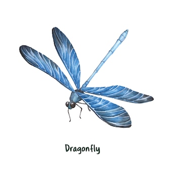Dibujado a mano libélula aislada sobre fondo blanco