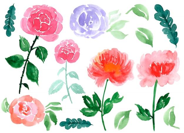 Dibujado a mano acuarela rosas y hojas aisladas en un blanco
