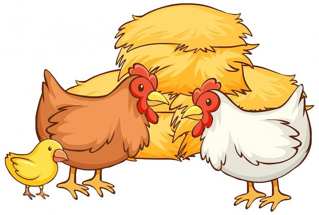 Dibujado a mano aislado de pollos y heno
