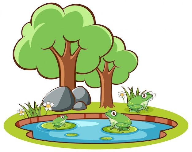 Dibujado a mano aislado de ranas en el estanque