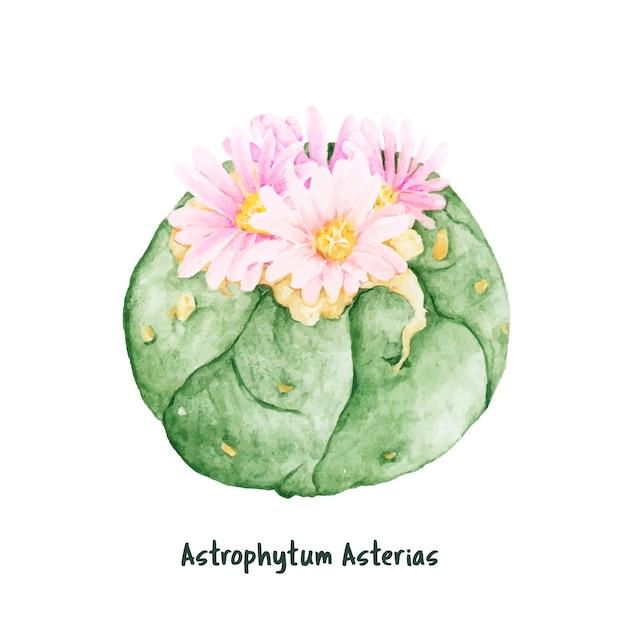 Dibujado a mano astrophytum asterias arena dólar cactus