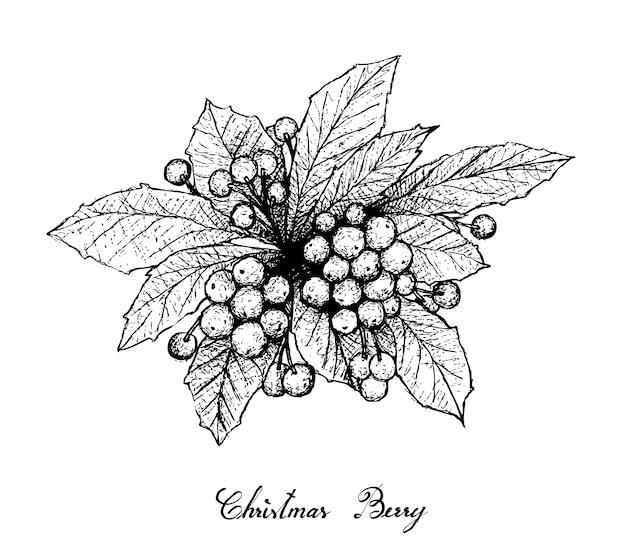 Dibujado a mano de bayas de navidad sobre fondo blanco