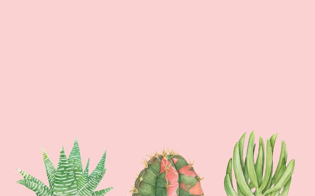 Dibujado a mano cactus y suculentas