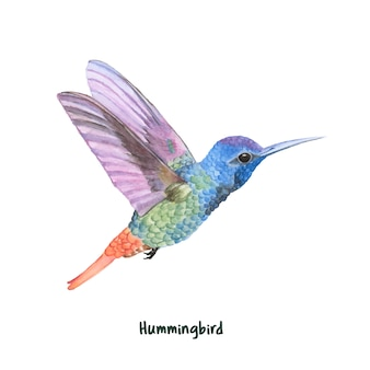 Dibujado a mano colibrí aislado sobre fondo blanco