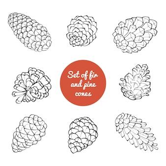 Dibujado a mano conjunto con conos de árbol de hoja perenne coníferas. diseño de fondo de decoración.