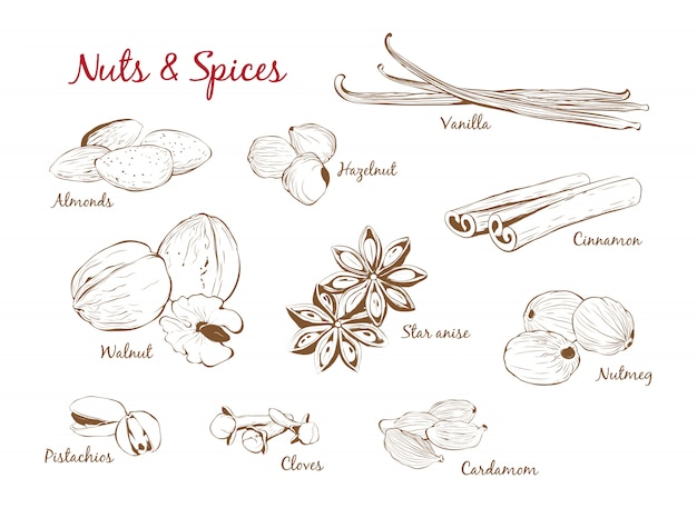 Dibujado a mano conjunto de especias y frutos secos en estilo de contorno. ilustración vectorial
