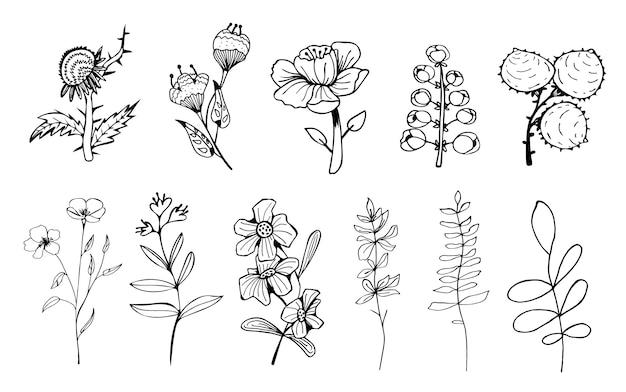 Dibujado a mano contorno elegancia flores ilustraciones.