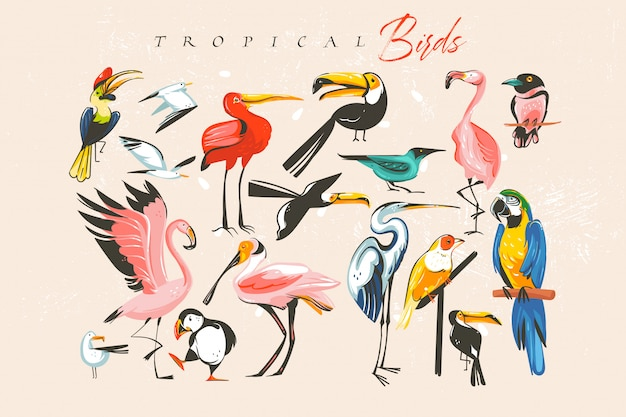 Dibujado a mano dibujos animados abstractos horario de verano divertido grupo grande conjunto de ilustraciones con zoológico exótico tropical o aves silvestres aisladas sobre fondo blanco