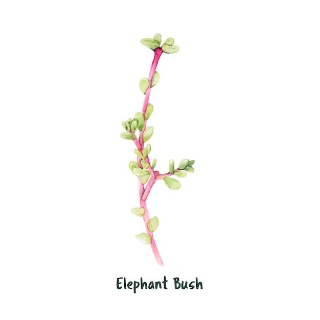 Dibujado a mano elefante arbusto suculento