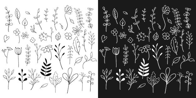 Dibujado a mano elementos botánicos