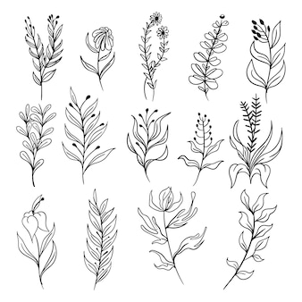 Dibujado a mano floral botánico