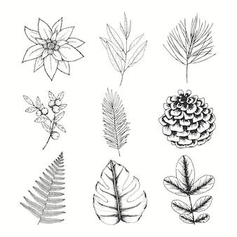 Dibujado a mano flores, hojas de bayas y conos de pino