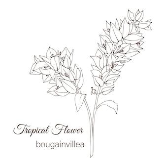 Dibujado a mano flores tropicales