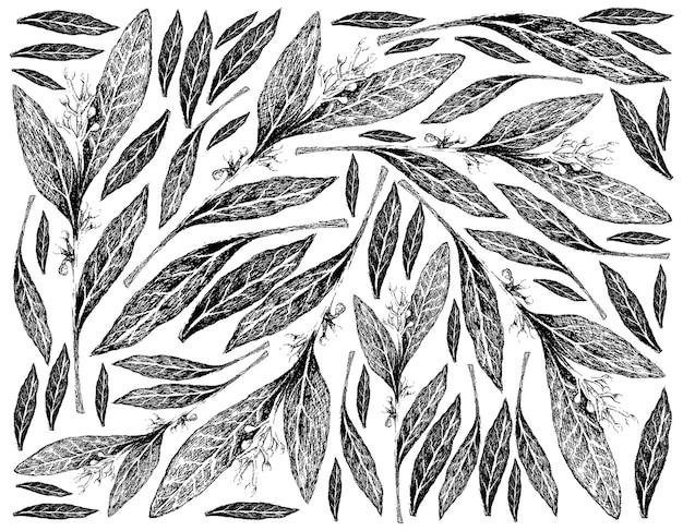 Dibujado a mano de fondo de plantas frescas de laurel de bahía