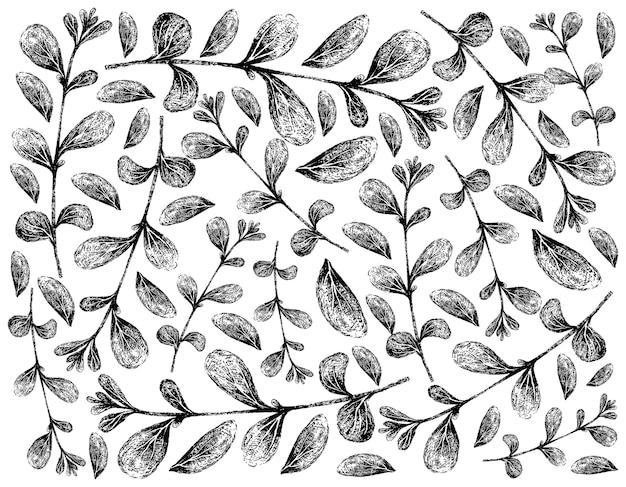 Dibujado a mano de fondo de plantas de mejorana fresca