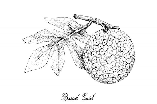 Dibujado a mano de fruta del pan