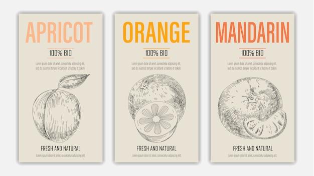 Dibujado a mano frutas de albaricoque, naranja y mandarina carteles. concepto de comida sana de estilo vintage.