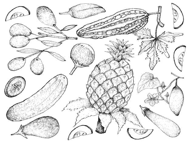 Dibujado a mano de frutas calabaza y calabaza