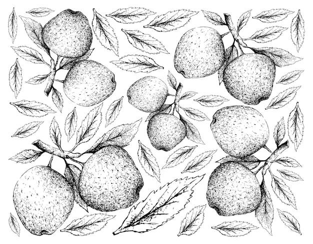 Dibujado a mano de frutas de manzana sobre fondo blanco