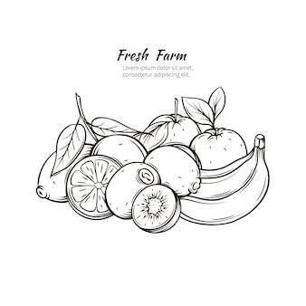 Dibujado a mano frutas tropicales.