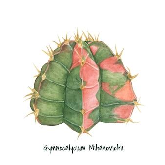 Dibujado a mano gymnocalycium mihanovichii moon cactus