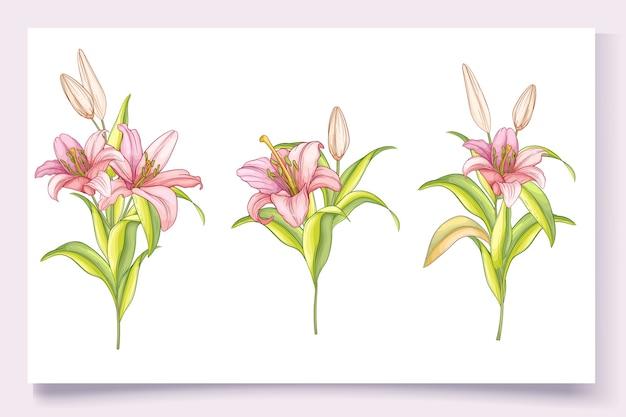 Dibujado a mano hermosa ilustración de flores de lirio