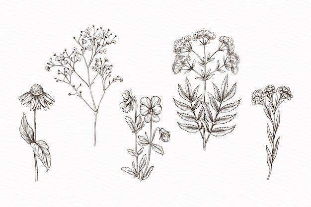Dibujado a mano con hierbas y flores silvestres