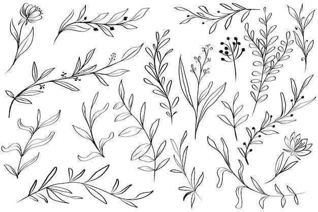 Dibujado a mano, hojas, floral, aislado clipart