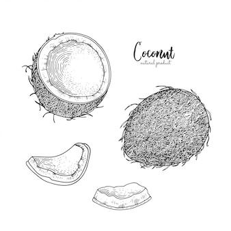 Dibujado a mano ilustración de coco aislado sobre fondo blanco. grabado art.