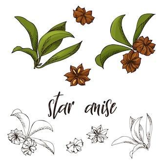 Dibujado a mano ilustración de hierba de anís estrellado