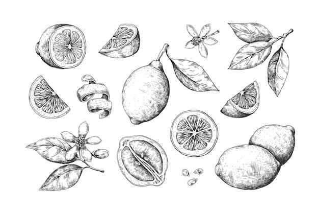 Dibujado a mano ilustración de limón