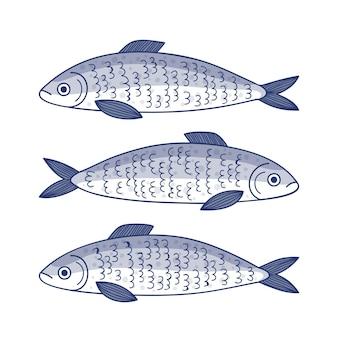 Dibujado a mano ilustración de sardina