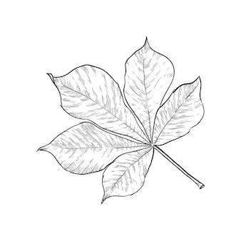 Dibujado a mano ilustración de vector de hoja de castaño