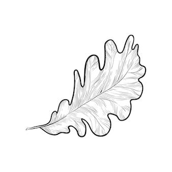 Dibujado a mano ilustración de vector de hoja de roble