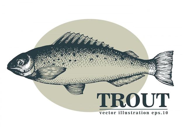 Dibujado a mano ilustración vectorial de pescado trucha.