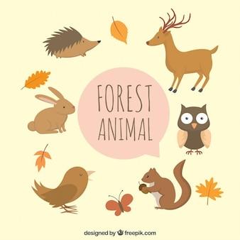 Dibujado a mano lindo de los animales del bosque con hojas