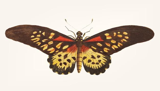 Dibujado a mano de mariposa leona