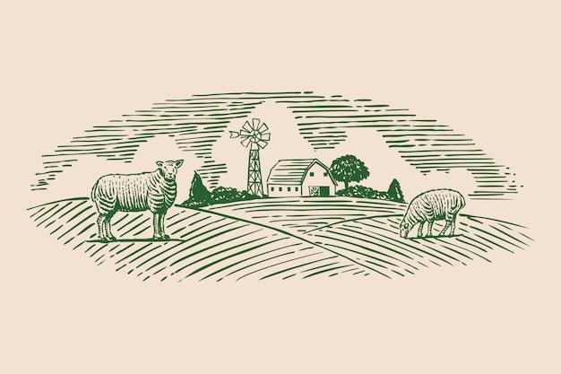 Dibujado a mano ovejas en pasto,