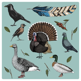 Dibujado a mano pájaro realista, estilo gráfico boceto, conjunto de doméstico. pavo y pato. ganso y cuervo paloma y gorrión. cuervo y pluma.