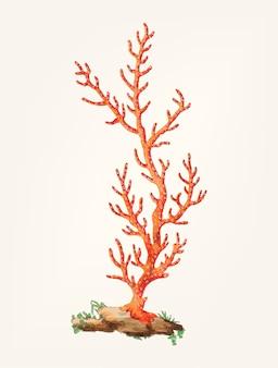 Dibujado a mano de patulous gorgonia
