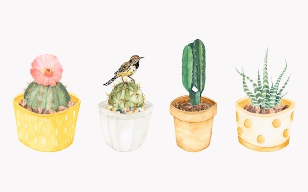 Dibujado a mano plantas de cactus