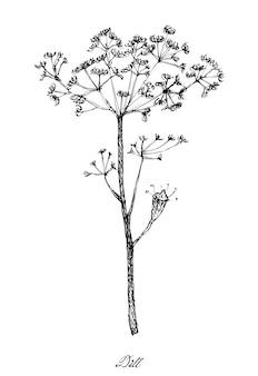 Dibujado a mano de plantas de eneldo sobre fondo blanco