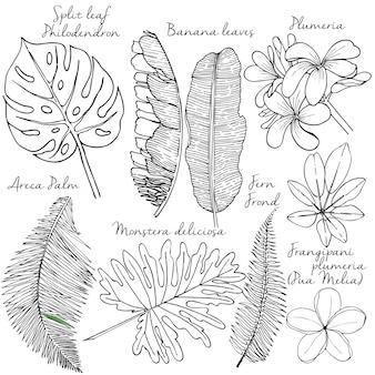 Dibujado a mano plantas exóticas