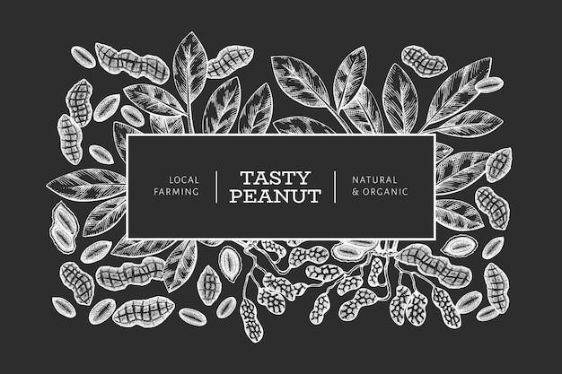Dibujado a mano plantilla de diseño de rama y granos de maní. ilustración de vector de alimentos orgánicos en la pizarra. ilustración de nuez vintage. cuadro botánico de estilo grabado.