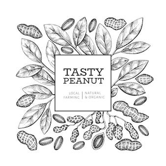 Dibujado a mano plantilla de diseño de rama y granos de maní