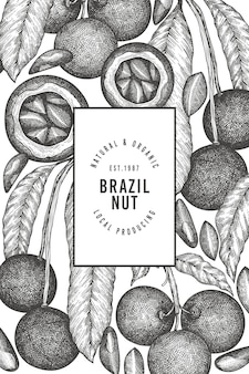 Dibujado a mano plantilla de diseño de rama y granos de nuez brasileña