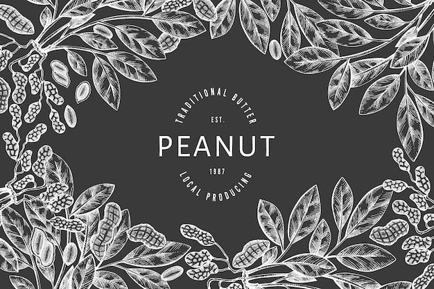 Dibujado a mano plantilla de rama y granos de maní. ilustración de alimentos orgánicos en la pizarra. ilustración de nuez retro. cuadro botánico de estilo grabado.